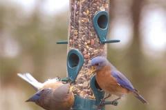birds-English-Design-Studio-Raleigh-