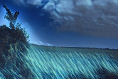 field-effect-English-Design-Studio-Raleigh-